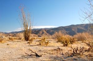 DSC_0050-Dry-desert-landscape